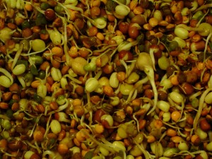 Organic_mixed_beans_shoots